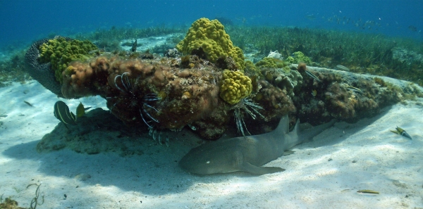 2010 05 29 dans rock nurse shark RESIZE