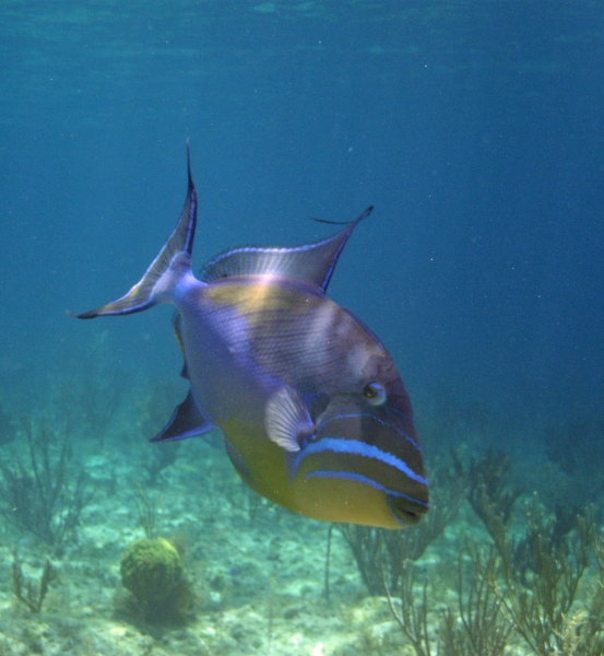 2010 06 03 triggerfish RESIZE