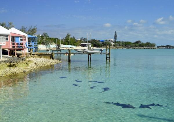 2012-05-05 staniel sharks RESIZE