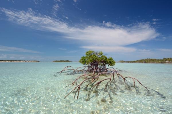 2012-05-21 mangrove RESIZE