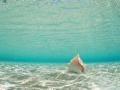 2012-05-13 cambridge underwater sandscape RESIZE