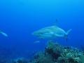 2012-05-18 shark 2 RESIZE