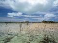 2012-05-21 black mangrove shroud RESIZE