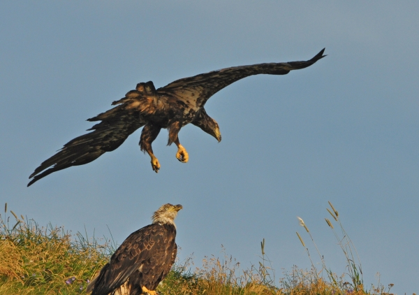 2011 08 14 double eagle 2 - Copy RESIZE