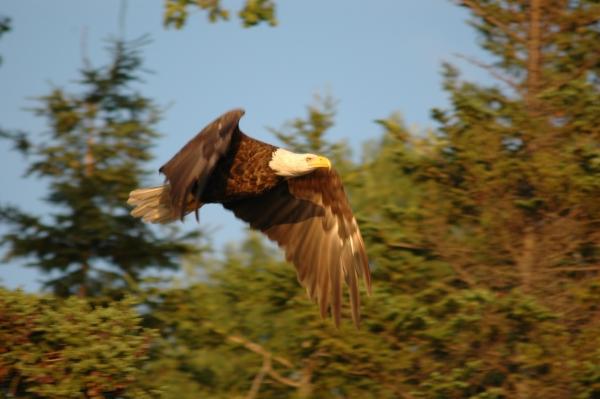 denys basin eagle 4 RESIZE