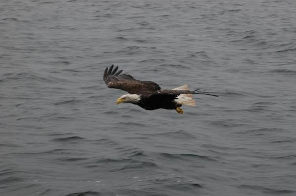 eagle4.jpg RESIZE