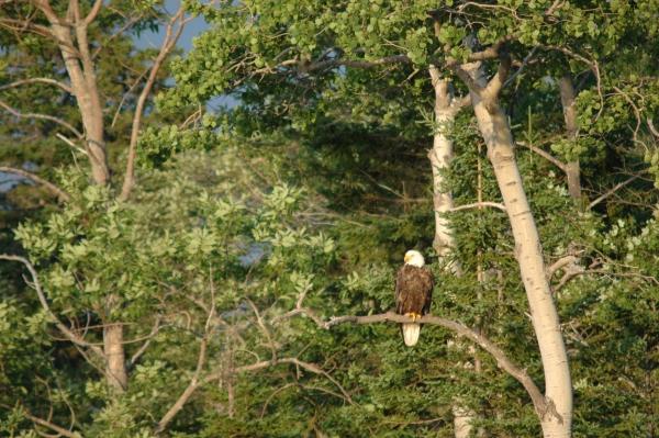 eagle5.jpg RESIZE