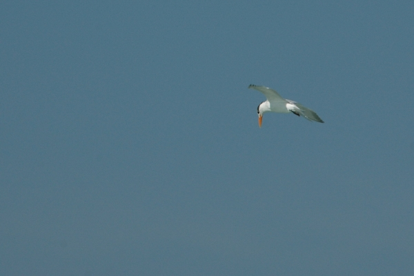 tern fishing 2 RESIZE