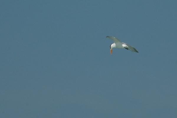 tern fishing 2 RESIZE