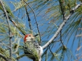 2012 03 30 marathon woodpecker RESIZE