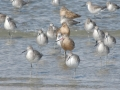 AC shore birds RESIZE