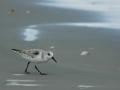 cumberland sanderling 2 RESIZE