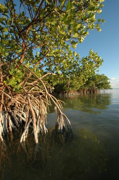 2012 01 08 wa mangroves RESIZE