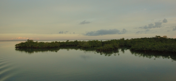 20121206 007 angelfish creek mangroves RESIZE