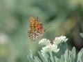 2012 02 10 tiptoe butterfly bpk RESIZE