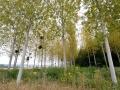 2012-09-05_241 mistletoe RESIZE