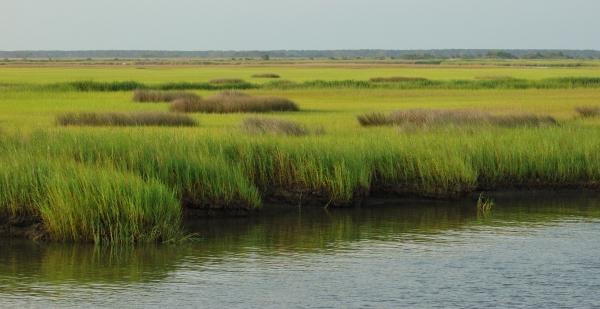 2012-07-11 sc icw marsh RESIZE