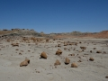 20130427 113 bisti scattered rocks RESIZE