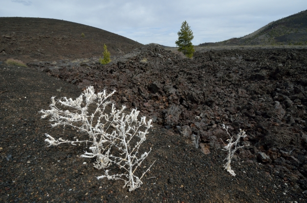 20130503 552 craters lava and sparse vegetation_01