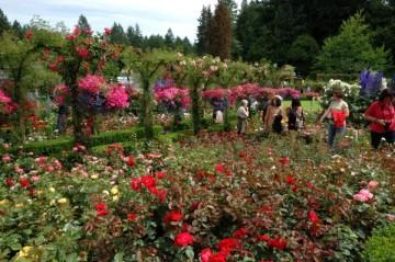 20130628 1908 butchart rose garden_01