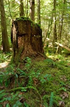 20130727 3012 prideaux haven hike log man_01