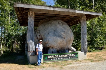 20130804 3204 port mcneill largest burl_01
