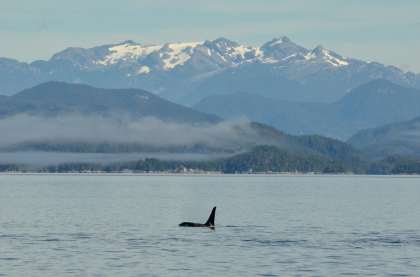 20130807 3381 orca and snowcapped mtn 2_01