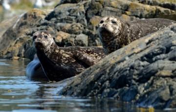 20130807 3471 seals resting_01