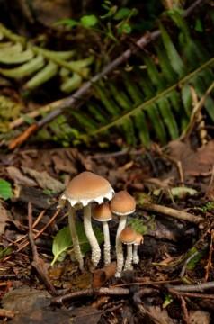 20130825 4246 forest mushrooms_01