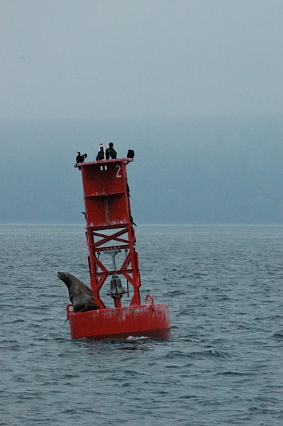 20131017 4698 sea lion on buoy_01 - Copy