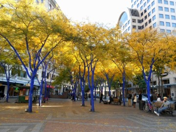 20131028 4790 seattle funky blue trees_01