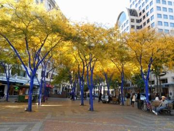 20131028 4790 seattle funky blue trees_01