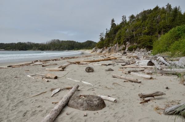 20140514 7047 pruth west beach lots of logs RESIZE