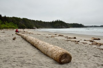 20140514 7050 pruth beach huge log RESIZE