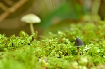 20140515 7242 tiny forest mushrooms  RESIZE