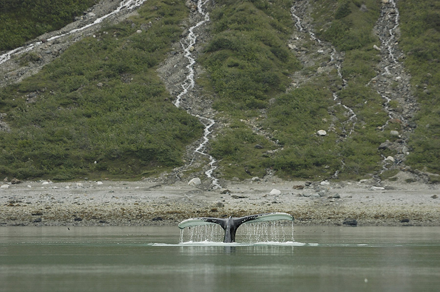 20140628 9218 reid whale tail psr