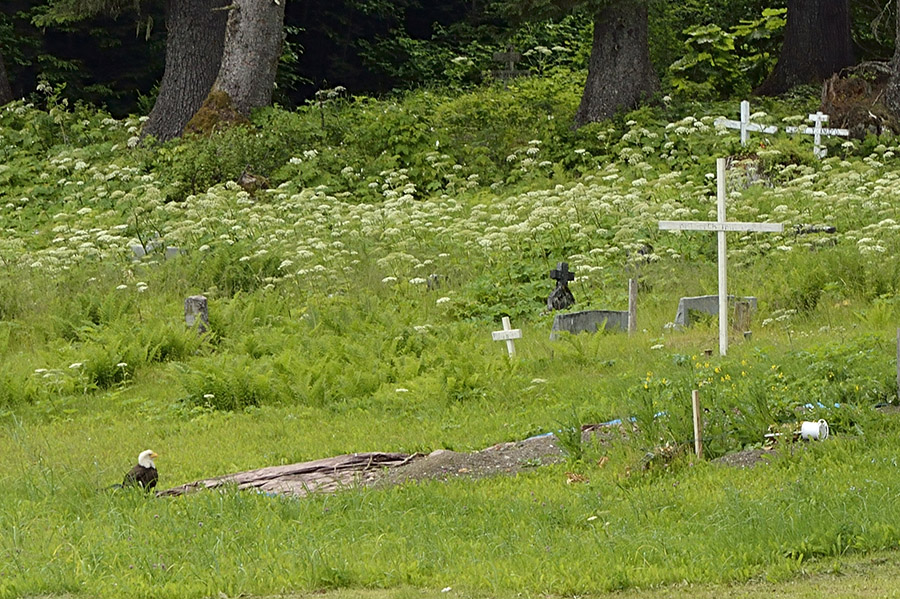 20140701 10228 hoonah eagle at grave 3 psr
