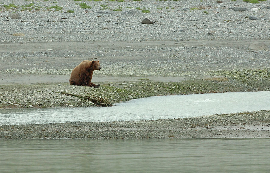 20140705 10472 sitting brown bear and stream psr