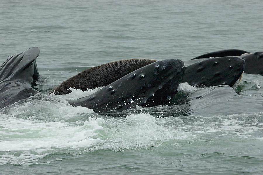 20140717 306 whale mouths psr