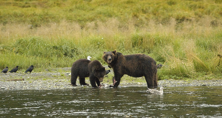 20140816 1121 mother and 2nd year cub psr