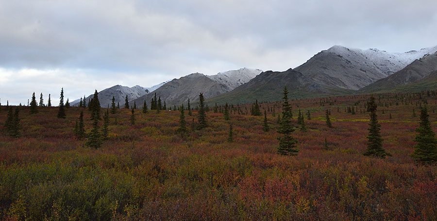 20140830 1959 denali np fall color brush snow dusted mtns r