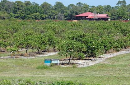 3 orchard