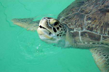 4 turtle hospital turtle 1