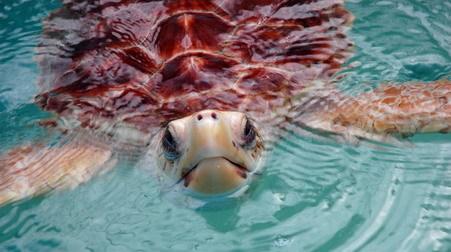 5 turtle hospital turtle 2