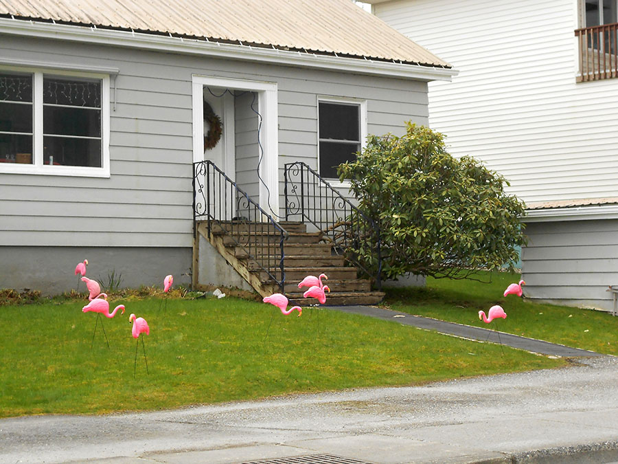 20150418 4633 flamingo flock r