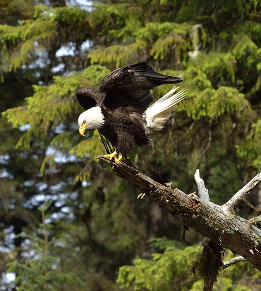 20150614 6491 eagle 4 r