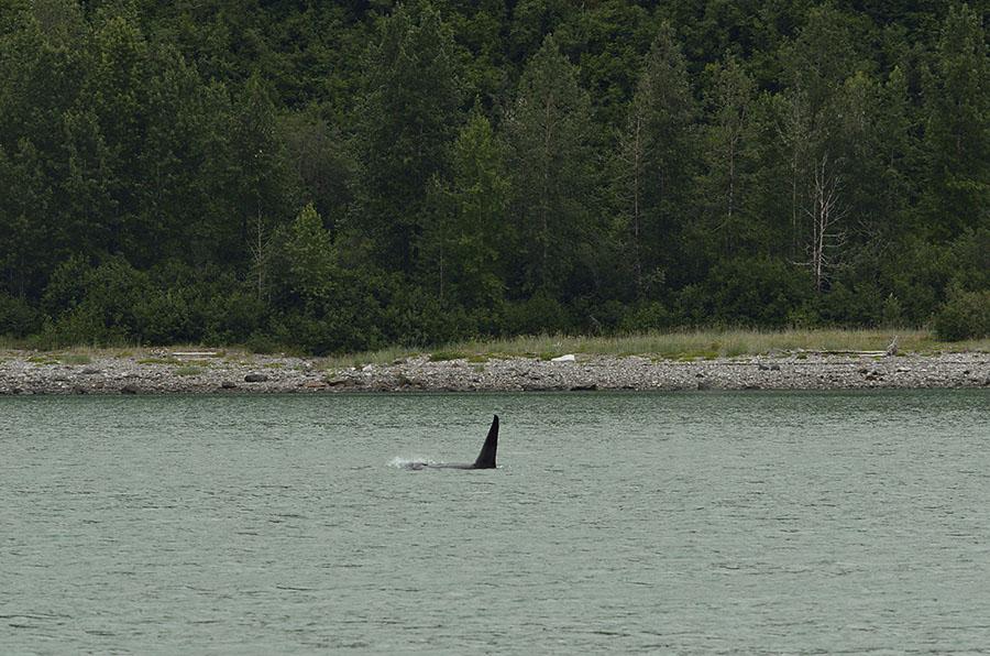 20150630 7614 orca fin r