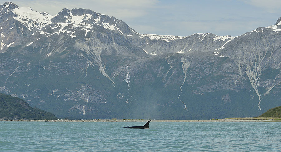 20150705 8422 orca and mountains 2 r