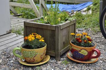 20150709 8760 tenakee teacup planters r