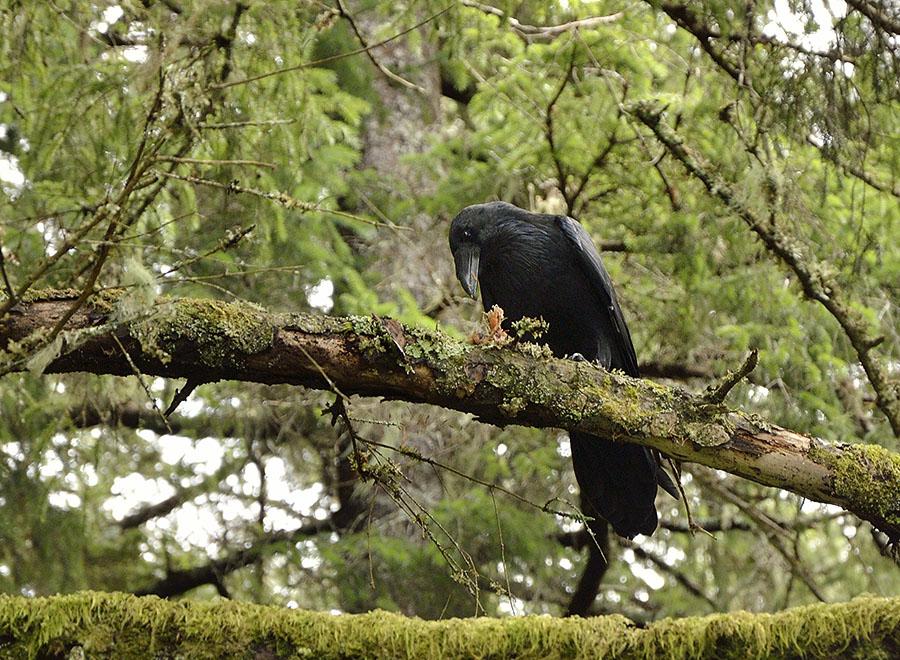 20150718 8927 raven 2 r